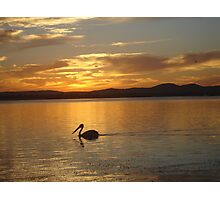 Orange Pelican Sunset Photographic Print
