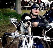 "SPIKE ""THE SUPER BIKER DOG"" by Henry VanderJagt"