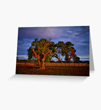 """In the Holding Yard"" Greeting Card"
