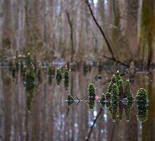 Gnome Home - Congaree National Park, South Carolina by Jason Heritage