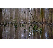 Gnome Home - Congaree National Park, South Carolina Photographic Print