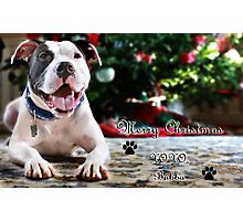 Bubba's First Christmas Photographic Print