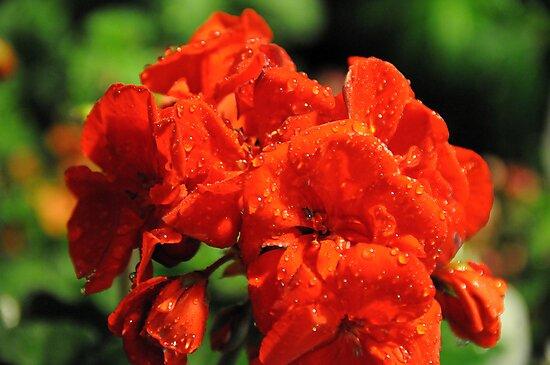 I Am Red! by Anne Smyth