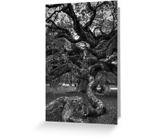 Angel Oak Tree 2 Greeting Card