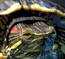 Red Eared Slider by lgodfroy43