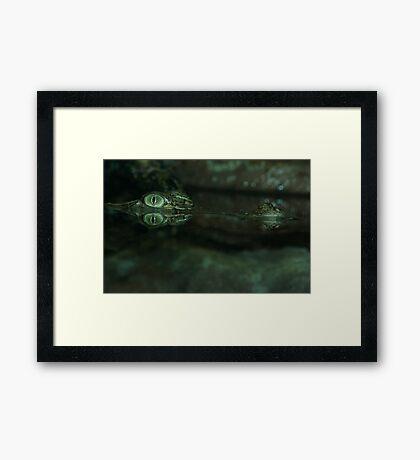 Saltwater Crocodile. Framed Print