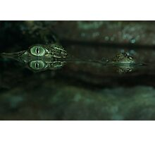 Saltwater Crocodile. Photographic Print