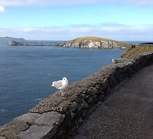 Ireland - Dingle Peninsula by soulimages