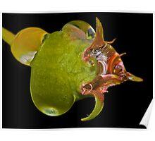Fish Droplet ! Poster