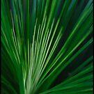 A little grass tree by Norman Winkworth