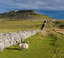 Pen Y Ghent Hill , The Yorkshire Dales. by Rob  Ford