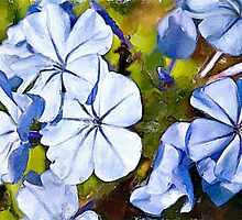 Blue Plumbago watercolour by PhotosByHealy
