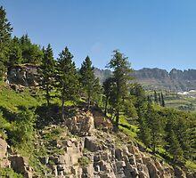 Logan Pass, Glacier National Park, Montana by jcimagery