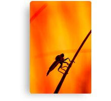 Robberfly Canvas Print