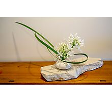 Ikebana arrangement with agapanthus Photographic Print