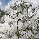 Pine Dreams by Judy Olson
