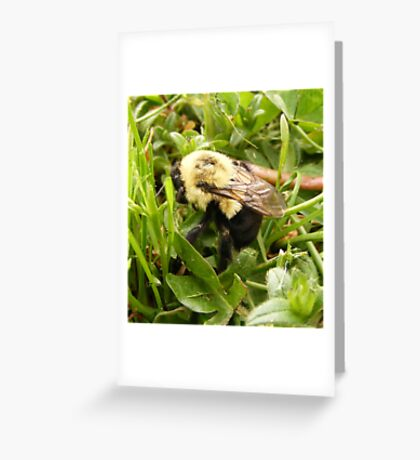 Humble Bumble Greeting Card