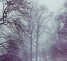 Winter Storm by jwilliamsphoto