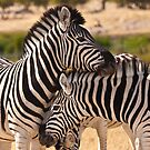 Friendship in black and white by Owed to Nature