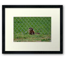 Baseball Field Critters Framed Print