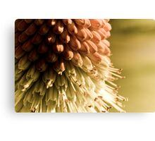 Red Hot Poker Detail Canvas Print