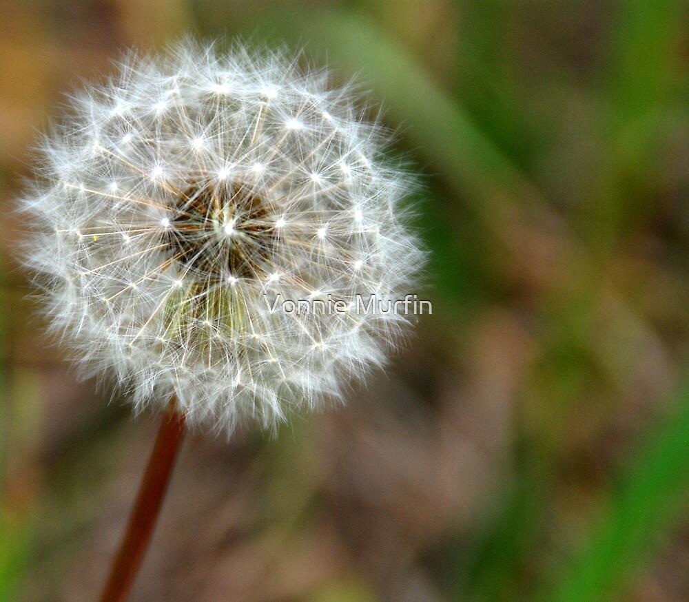 Make a Wish by Vonnie Murfin