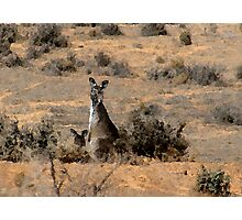"""Watercoloured""  kangaroos Photographic Print"
