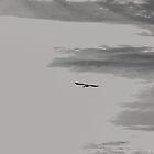 Swan Solo  by Jean Poulton
