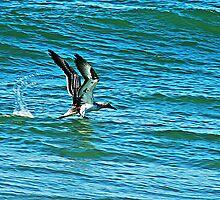 Osprey Away by bribiedamo