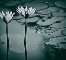Twin Lily flowers pair by benbdprod