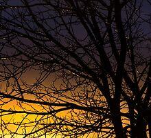 Winters Sundown  by Jean Poulton