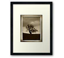 Lone Oak Framed Print