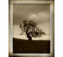 Lone Oak Photographic Print