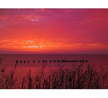 Sunset Pelicans Photographic Print