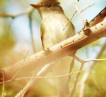 Flycatcher by Ryan Houston