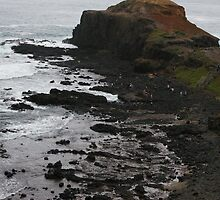 Basalt Outcrop at Cape Shank by Lesley  Hill