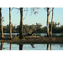 ducks foot lagoon Photographic Print