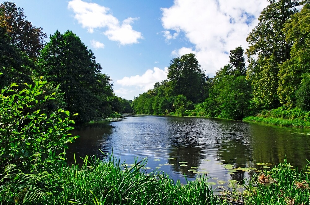 Along Mere Pond, Calke Park by Rod Johnson
