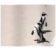 Jackass Penguine's Poster