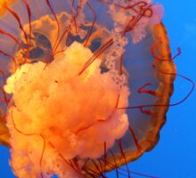 Jelly FIsh in the Blue Sticker
