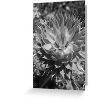 Thistle crown Greeting Card