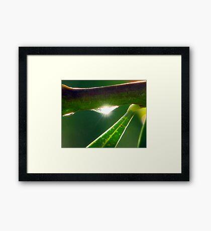 BLING  Framed Print