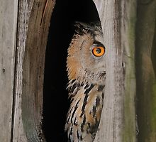 Peaking, Red-Eyed Cape Eagle Owl by tshirtdesign