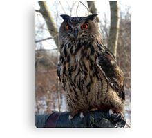 Daytime, Red-Eyed Cape Eagle Owl Canvas Print