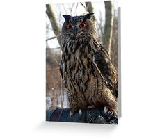 Daytime, Red-Eyed Cape Eagle Owl Greeting Card