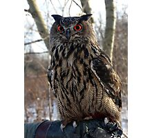 Daytime, Red-Eyed Cape Eagle Owl Photographic Print