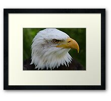 American Eagle Face Framed Print