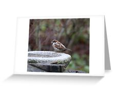 Water Fountain Finch Greeting Card