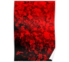 Red Beauty Poster