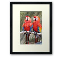 Red Macaw Parrots Framed Print
